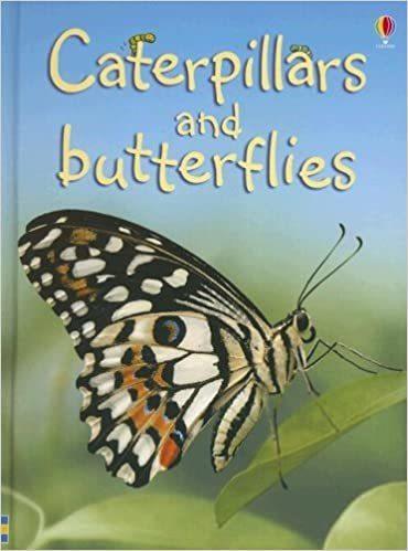 Caterpillars and Butterflies (1)