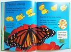 Caterpillars and Butterflies (3)